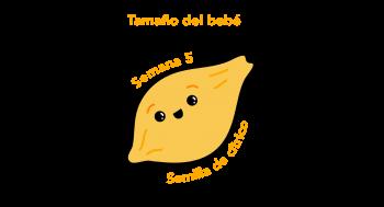 Tamaño del bebé Semilla de cítrico